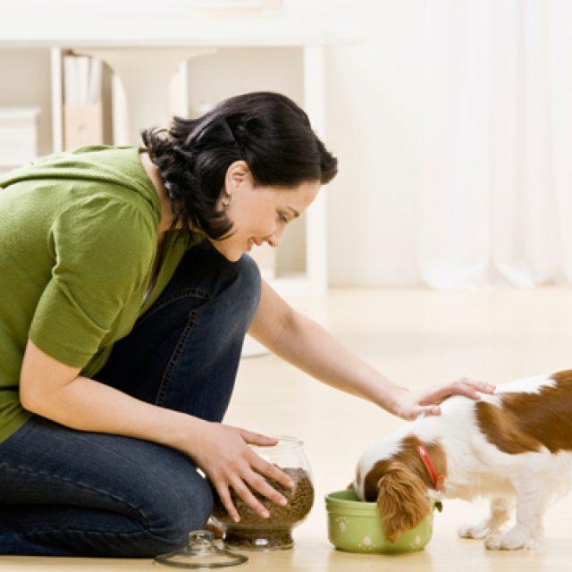 التغذية السليمة للكلاب واحتياجتها الصحية اليومية