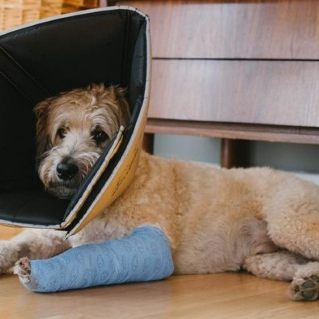 كسور العظام في الكلاب وعلاجها