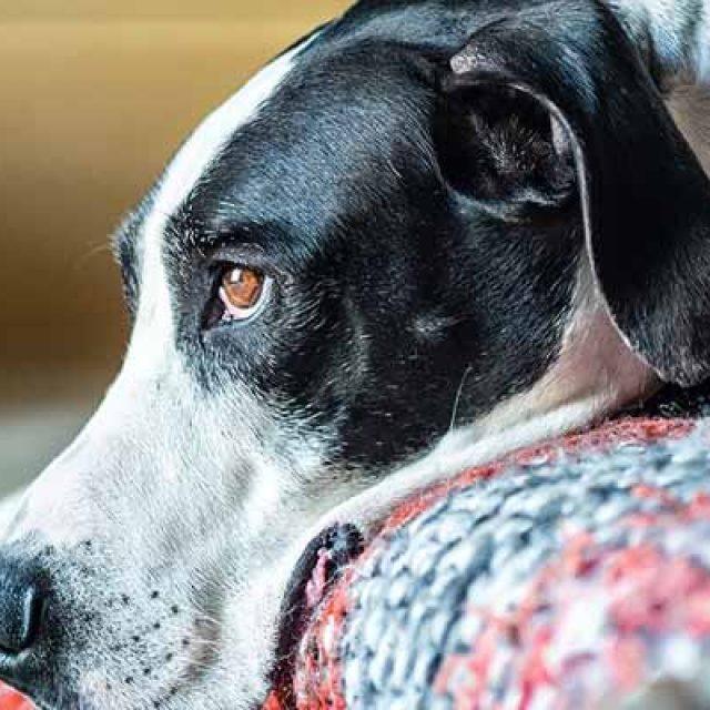 علاج القئ عند الكلاب .. مشكلة خطيرة وعلاج بسيط