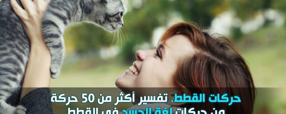 حركات القطط ومعناها : لغة الجسد عند القطط