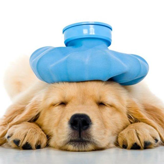 الأدوات اللازمة في الإسعافات الأولية في الكلاب