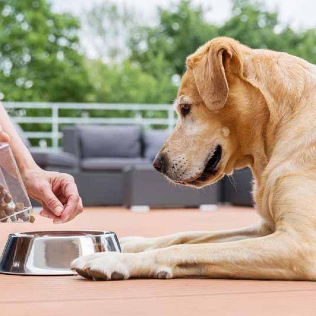 فوائد المعادن والأملاح في دراي فود الكلاب