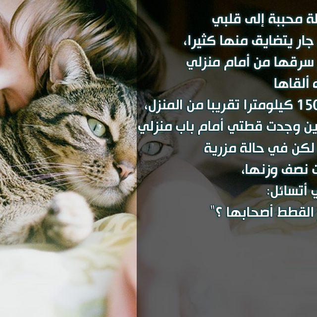 هل تتذكر القطط أصحابها ؟ معلومات مذهلة عن ذاكرة القطط