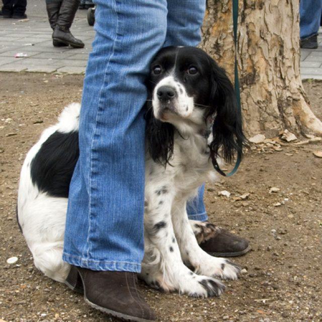 كيف تجعل كلبك شجاع: علاج الخوف عند الكلاب