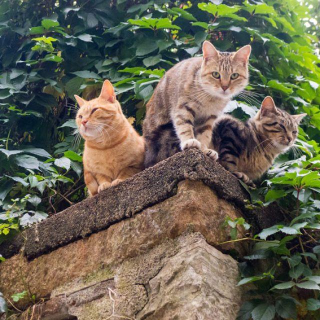 لماذا تحب القطط الجلوس في الأماكن العالية