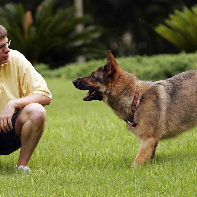 ملف تدريب الكلاب على الحركات المختلفة