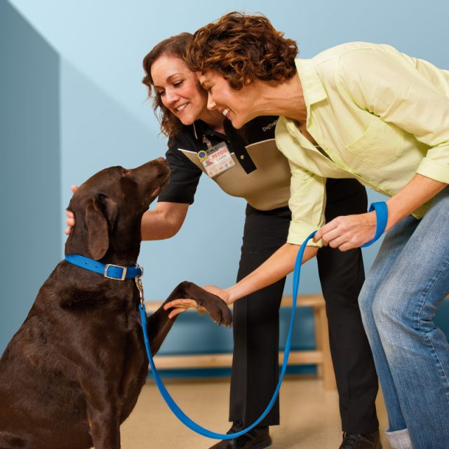 كيفية تدريب الكلاب على الطاعة بأسهل الطرق