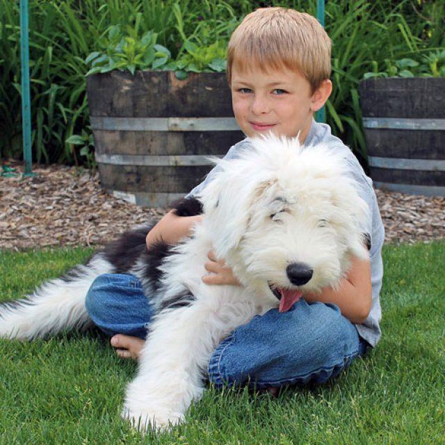 فوائد تربية الحيوانات الأليفة في البيت