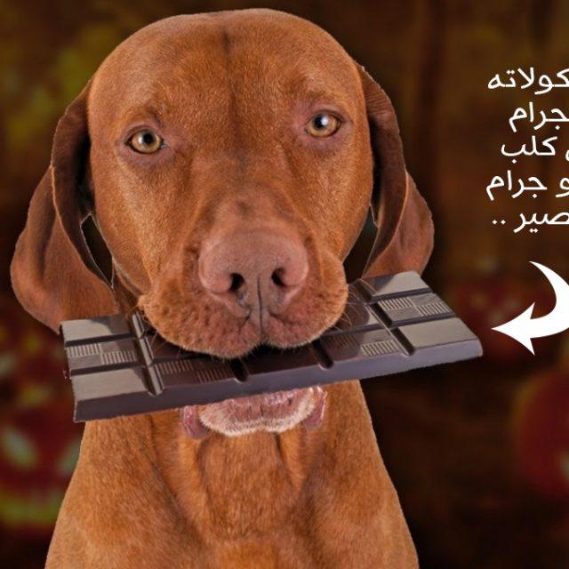 علاج تسمم الكلاب من الشوكولاتة