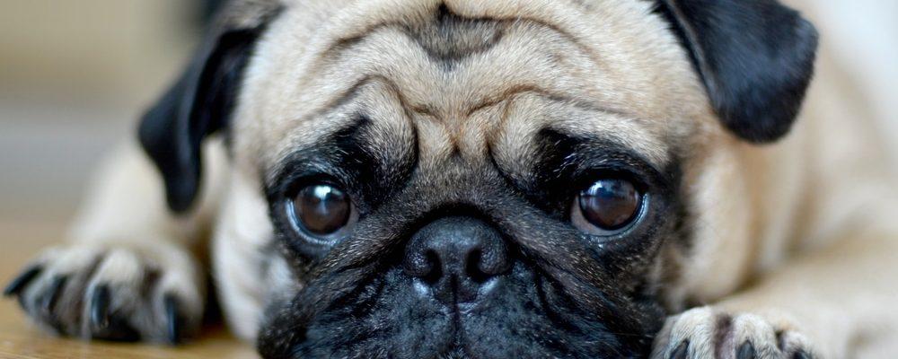علاج حروق الكلاب في المنزل