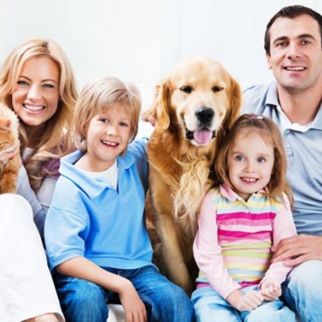 معلومات خاطئة عن صحة الكلاب والقطط