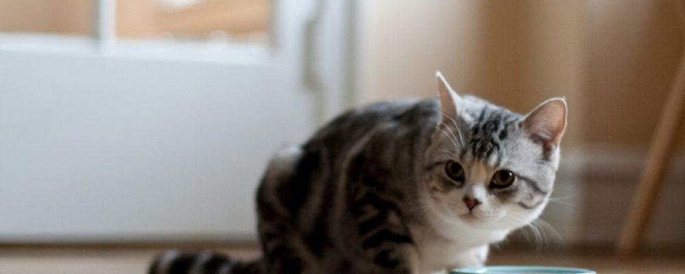 أسباب فقدان الوزن عند القطط