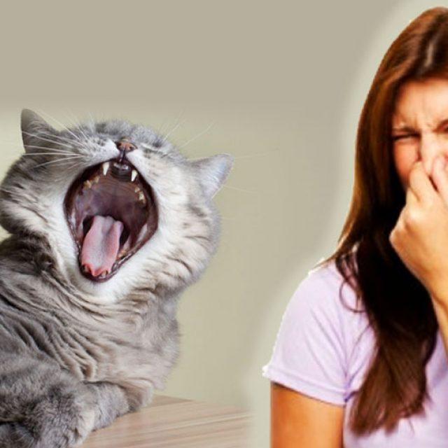 طرق التخلص من رائحة الفم الكريهة في القطط