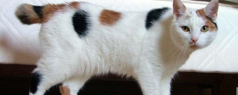 3 خطوات لعلاج رش البول عند القطط الذكور