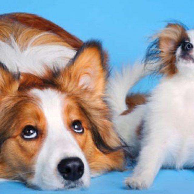 5 نصائح لإطالة فترة حياة الكلاب