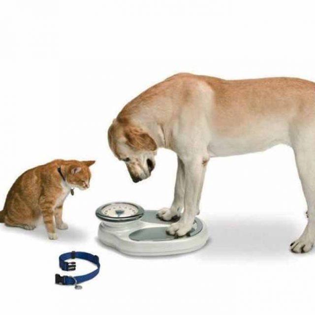 7 عوامل تسبب فقدان الوزن المفاجئ في الحيوانات الأليفة