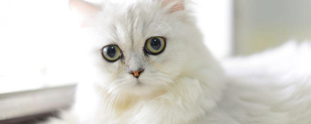 علاج الإمساك عند القطط وأعراضه بالتفصيل