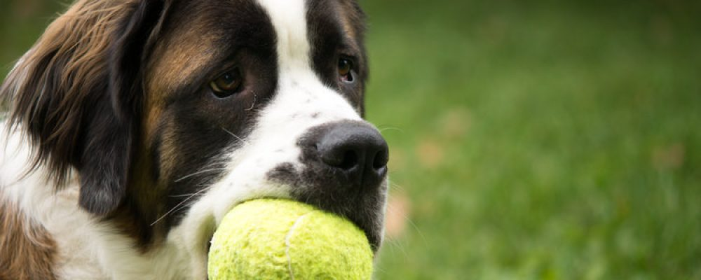 هل تستطيع الكلاب أن تتذوق الطعام ؟ .. اعرف بالتفصيل