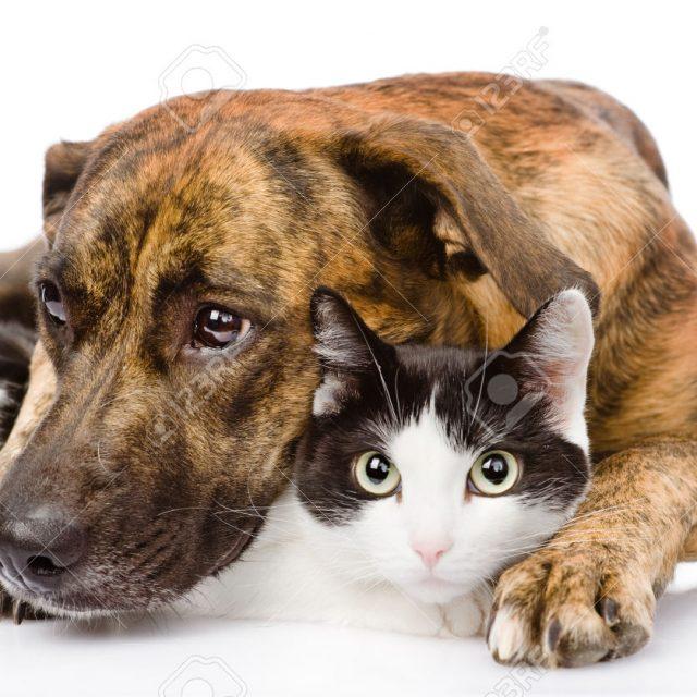 أنواع البكتيريا المسببة للأمراض فى الحيوانات الأليفة