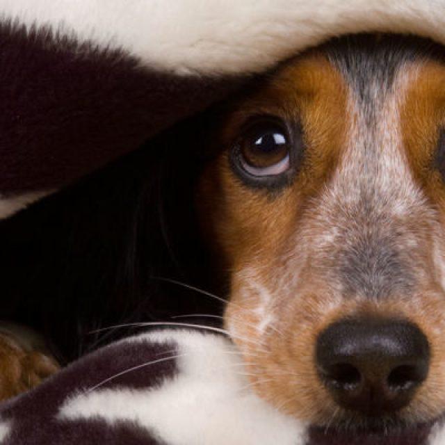 طرق العناية بالكلاب في فصل الشتاء وحمايتها من الأمراض