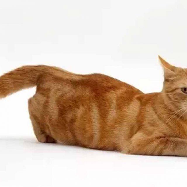 ما هي أضرار عدم تزاوج القطط الذكور والاناث