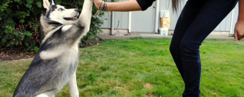 اسئلة وأجوبة عن تربية الكلاب
