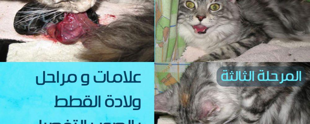 علامات ولادة القطط بالصور.. كيف اعرف ان القطة انتهت من الولادة ؟