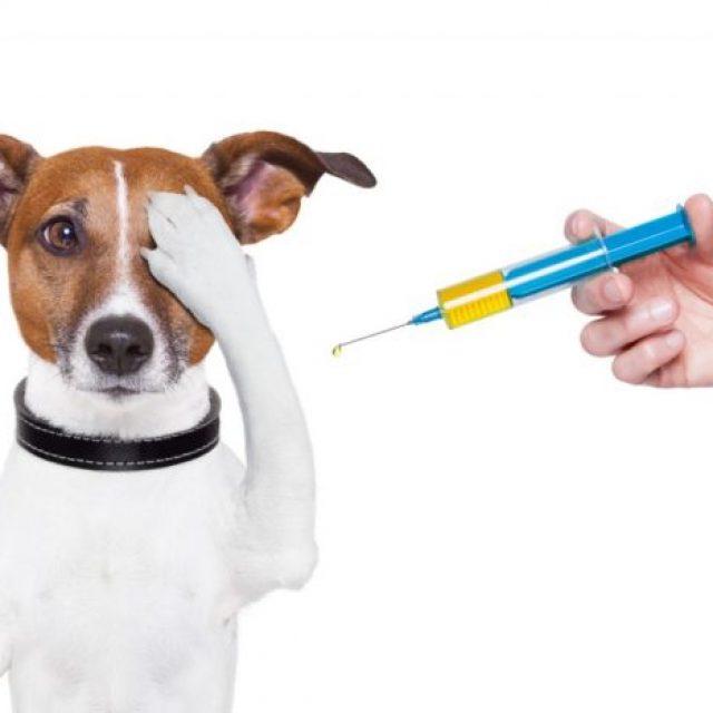 هل يجب تطعيم الكلاب والقطط سنويا ؟ اعرف الاجابة بالتفصيل