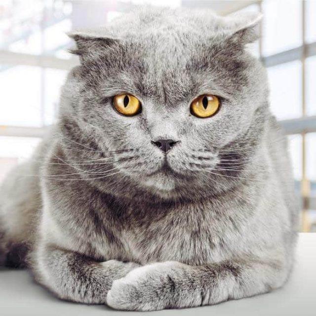 كيف يعمل عقل القطط ؟ 5 حقائق تعرفها لأول مرة