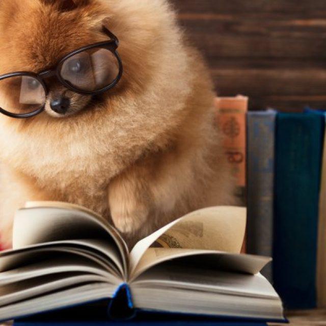 5 أخطاء تفعلها مع كلبك الخاص بك بدون أن تدري