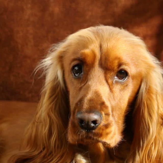 5 خطوات تساعد في علاج الإمساك عند الكلاب
