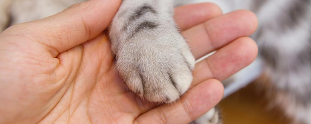 7 أخطار تحدث بسبب عملية نزع أظافر القطط