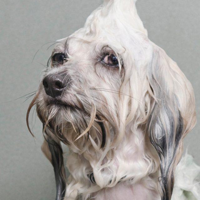 7 اخطاء تقع فيها اثناء استحمام الحيوانات الأليفة