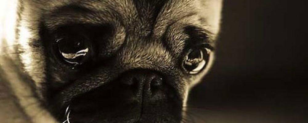7 تصرفات غير مقصودة تؤدي إلى الإكتئاب في الكلاب .. احذر منها