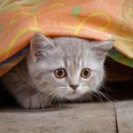 كيف تتعامل مع القطط الخائفة