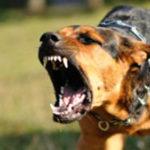 نزع العدوانية والشراسة من الكلب