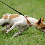 لماذا يأكل الجرو فضلاته 10أسباب تؤدي إلى أكل الكلاب لبرازها