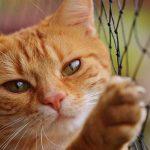 عيون قطتي تدمع كثيرا فما الحل وهل هذا مرض ؟ خروج الدموع بكثره من عيون القطط قد يدل على اصابة مؤقتة أو مرض Epiphora