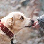 5 نصائح لتبقى كلبك المسن بصحة جيدة
