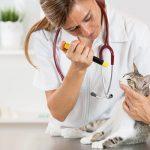 7 نصائح لعلاج عدوى العين عند القطط