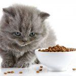 5 نصائح لاختيار دراي فود القطط الصغيرة