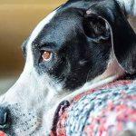 علاج القئ عند الكلاب
