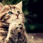 هل القطط تدعي على صاحبها