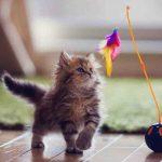 دراسات مستوى ذكاء القطط