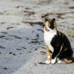 هل يعود القط الى المنزل كيف تعثر على القطط المفقودة