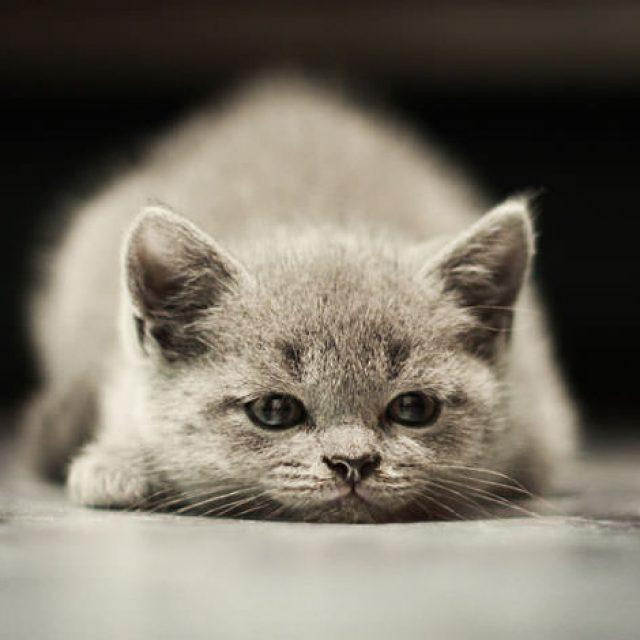 طرق التخلص من براغيث القطط بشكل نهائي