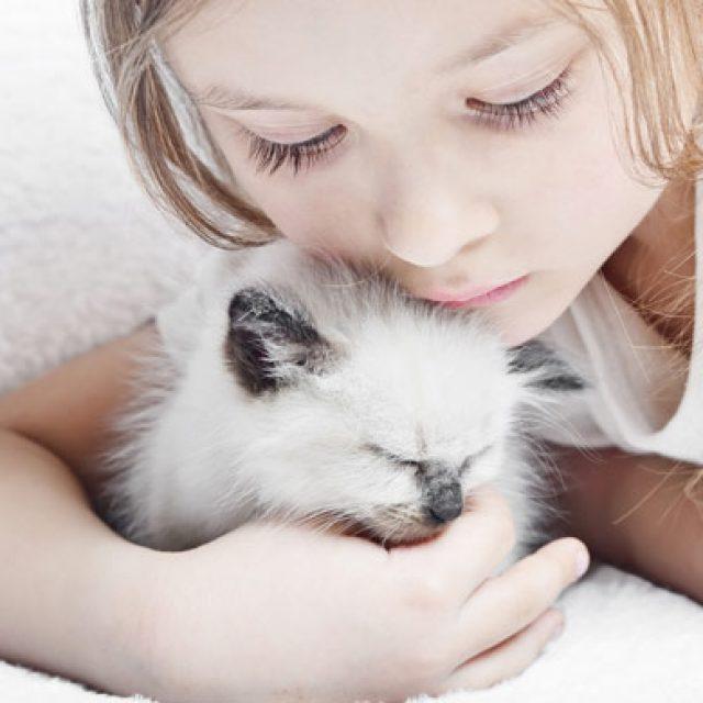 كيفية التعامل مع القطط الصغيرة (ملف شامل)