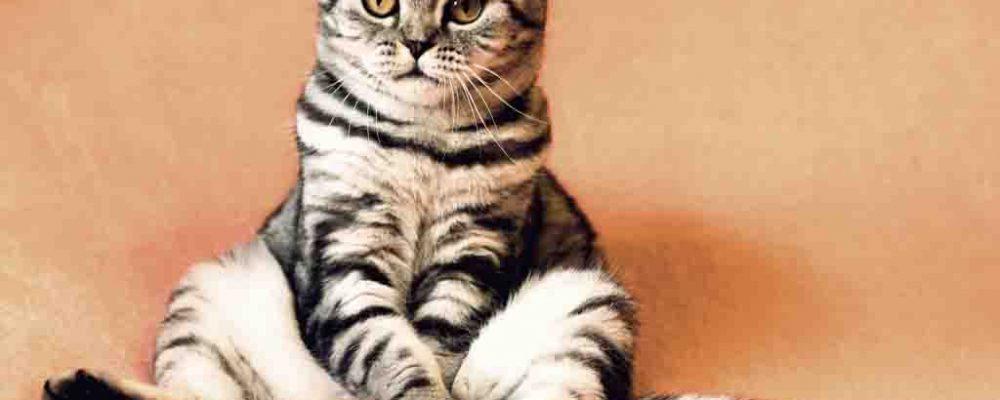 علاج التهاب القولون عند القطط