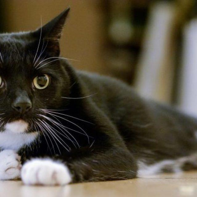 نوبات الصرع في القطط .. ما هي الأسباب و العلاج ؟