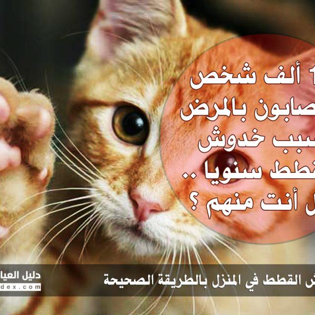 معالجة خدوش القطط في المنزل